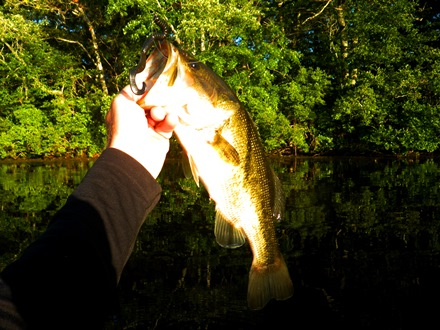 Cape Cod Largemouth Bass Fishing